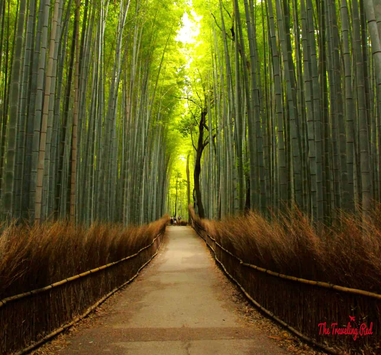 You must see Arashiyama Bamboo Grove when you visit Japan. Make sure to go early to avoid the crowds. The bamboo forest was incredible. They say that those trees can grow up to 3 feet per day!