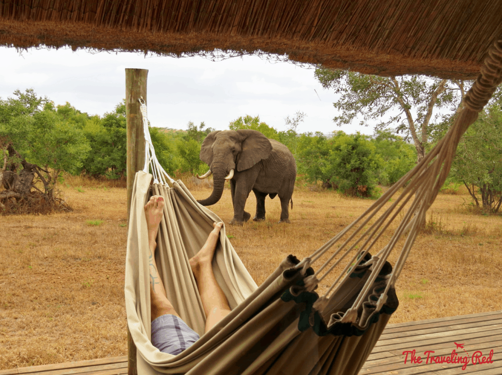 Favorite moment of our safari in South Africa. We stayed at the Leopard Hills lodge, where each of the 8 units has its own cottage with a back deck including a private pool, outdoor shower and a hammock. An elephant passed right by us as my husband was napping in the hammock.