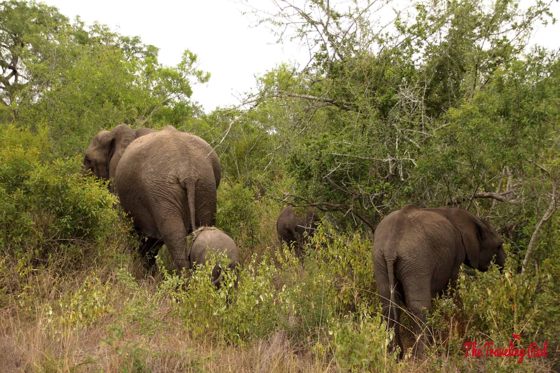 A family of elephants in South Africa