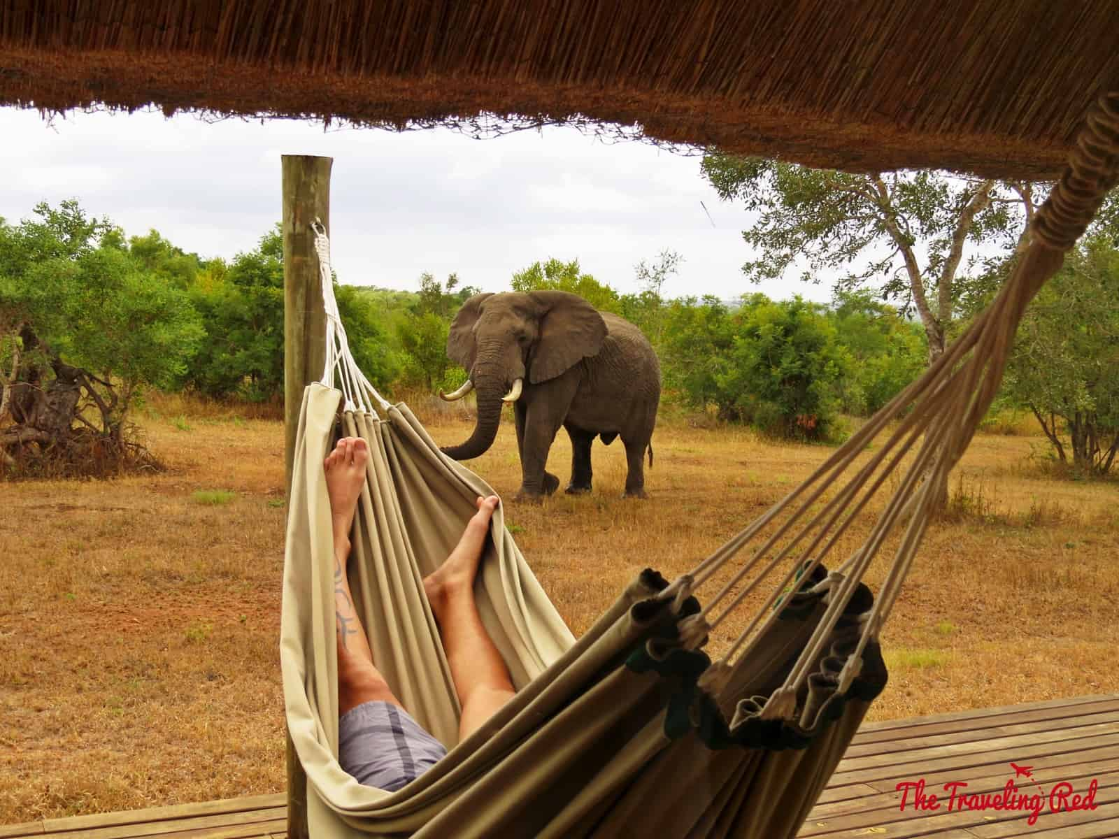 An elephant passing by our room