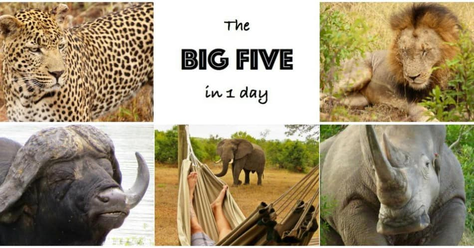 the big five in 1 day the traveling red