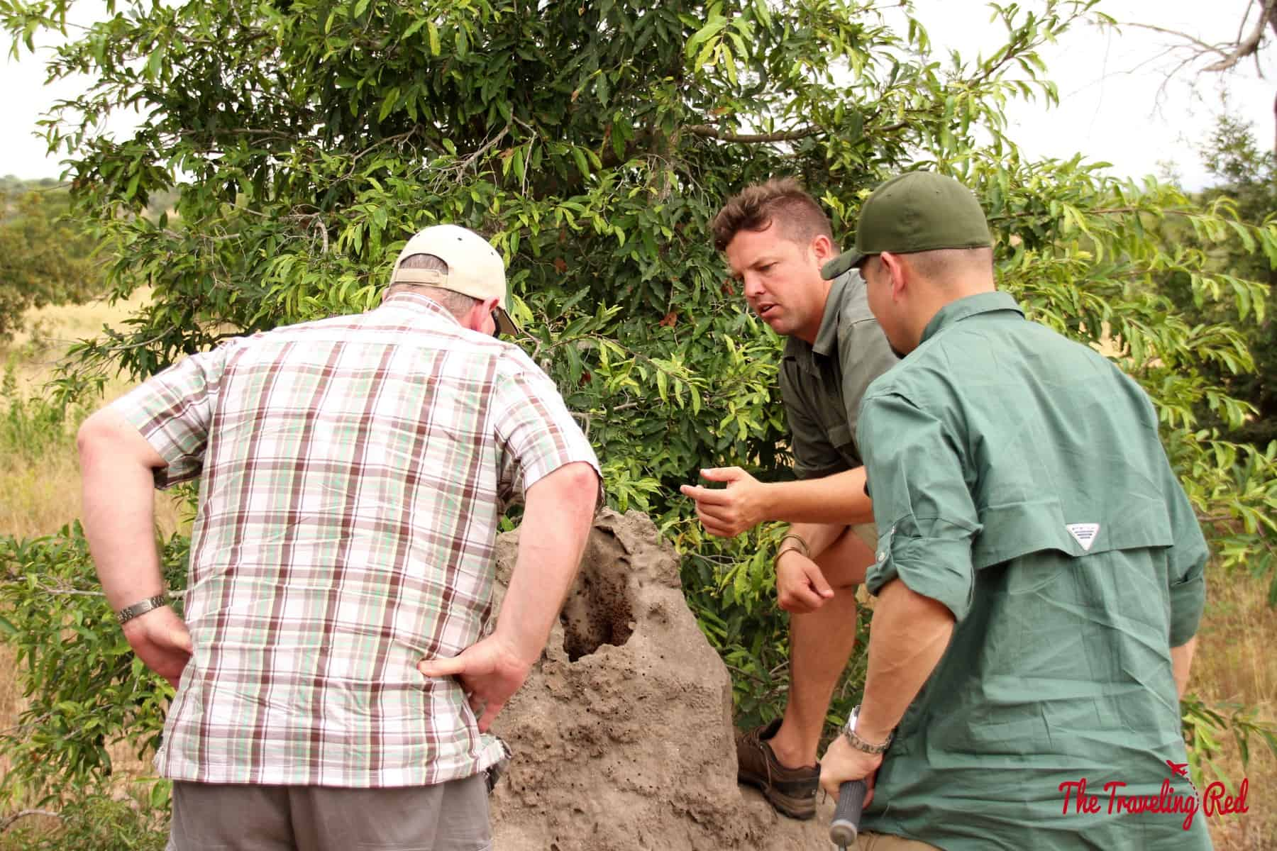 Checking out a termite pile