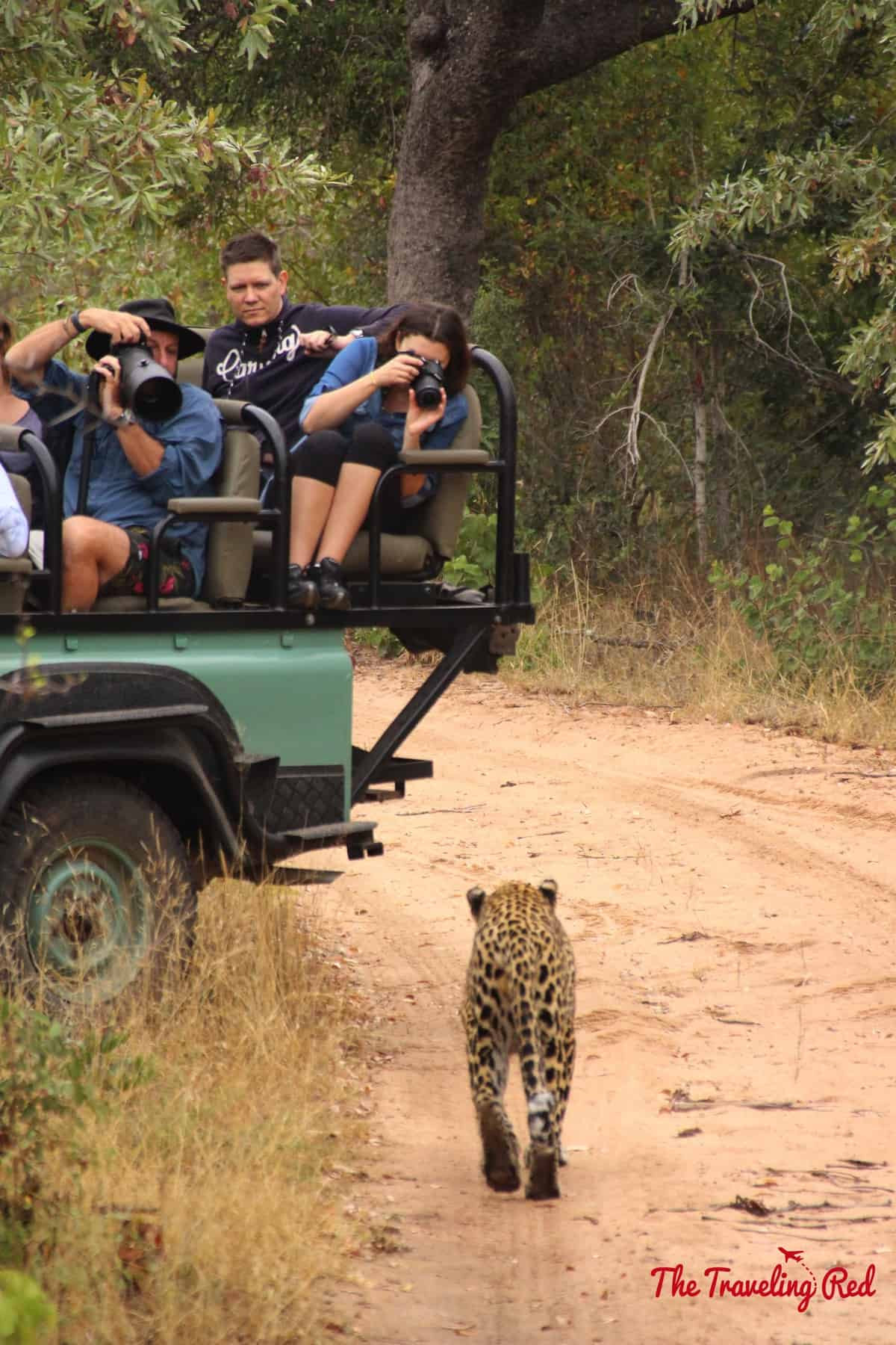 Leopard sighting while on safari in South Africa