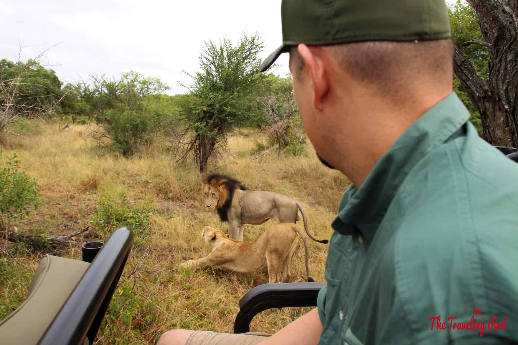 My hubby checking out the lions about to mate
