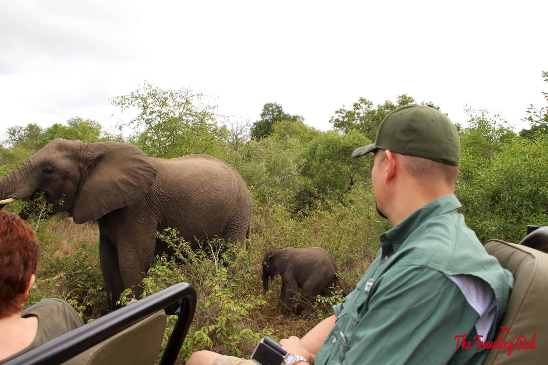 Watch the family of elephants