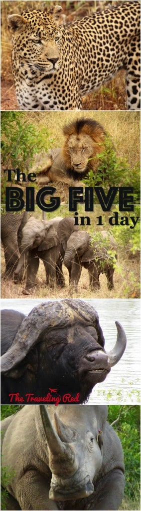 The Big Five Animals we saw in 1 day while on Safari in Sabi Sands in South Africa.