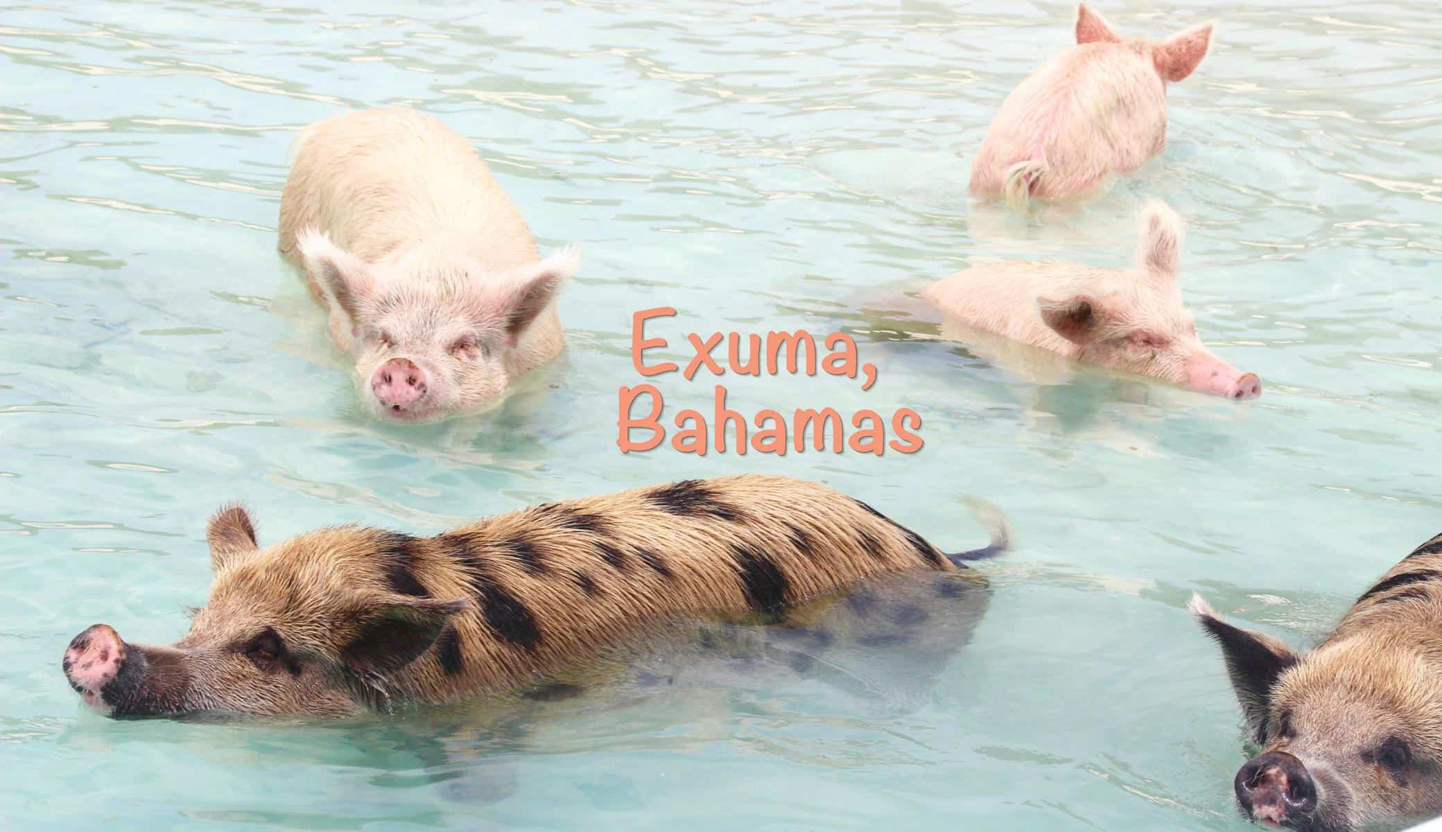 Swimming pigs, sharks & so much more in Exuma, Bahamas – The