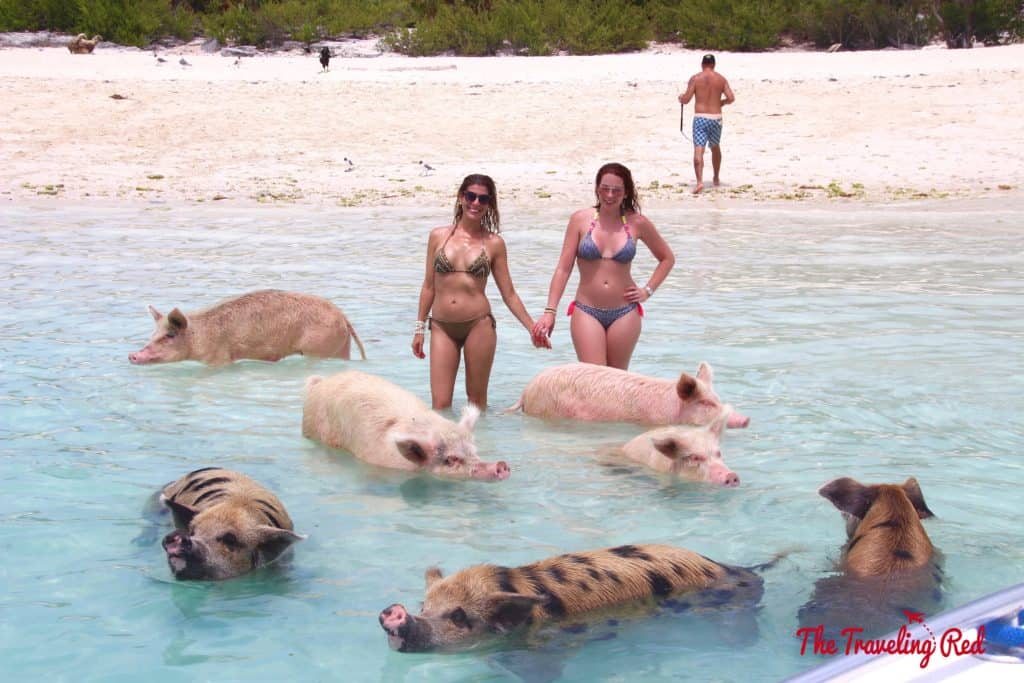 The Exumas famous swimming pigs! Found on Big Major Cay, an uninhabited island, is the beach full of swimming pigs that Exuma is known for. It's located near Staniel Cay. This is the top thing to see when visiting Exuma in the Bahamas.