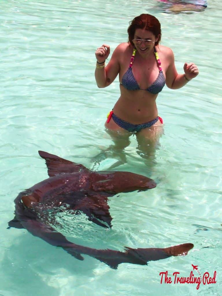 Swimming with the nurse sharks in Compass Cay. This cay in the Exumas is known for an area of shallow water where nurse sharks live and tourists always come to swim with them. A must when visiting Exuma in the Bahamas