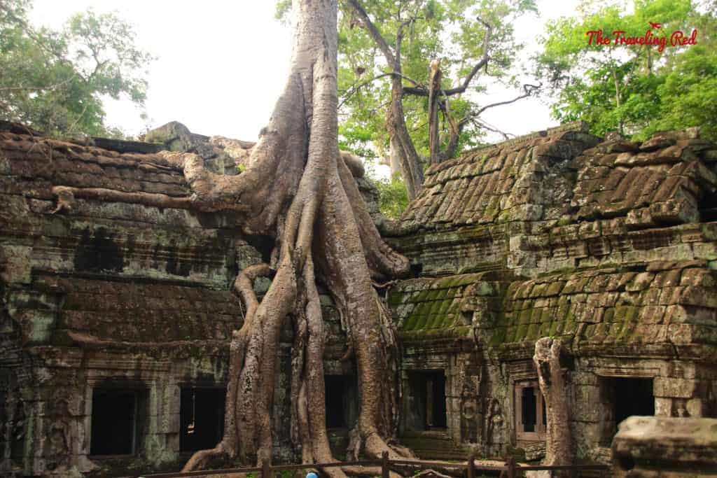 The famous spot from Tomb Raider in the Temple Ta Prohm | Cambodia Temples | Siem Reap | Angkor Wat | Angkor Passes | Photography Tour | Angkor Archeological Park | Ta Prohm | Tomb Raider | Banteay Kdei | Ta Nei | North Gate | Bayon | Wat Thmey | Monks | South Gate | Preah Khan    #siemreap #angkorwat #cambodia