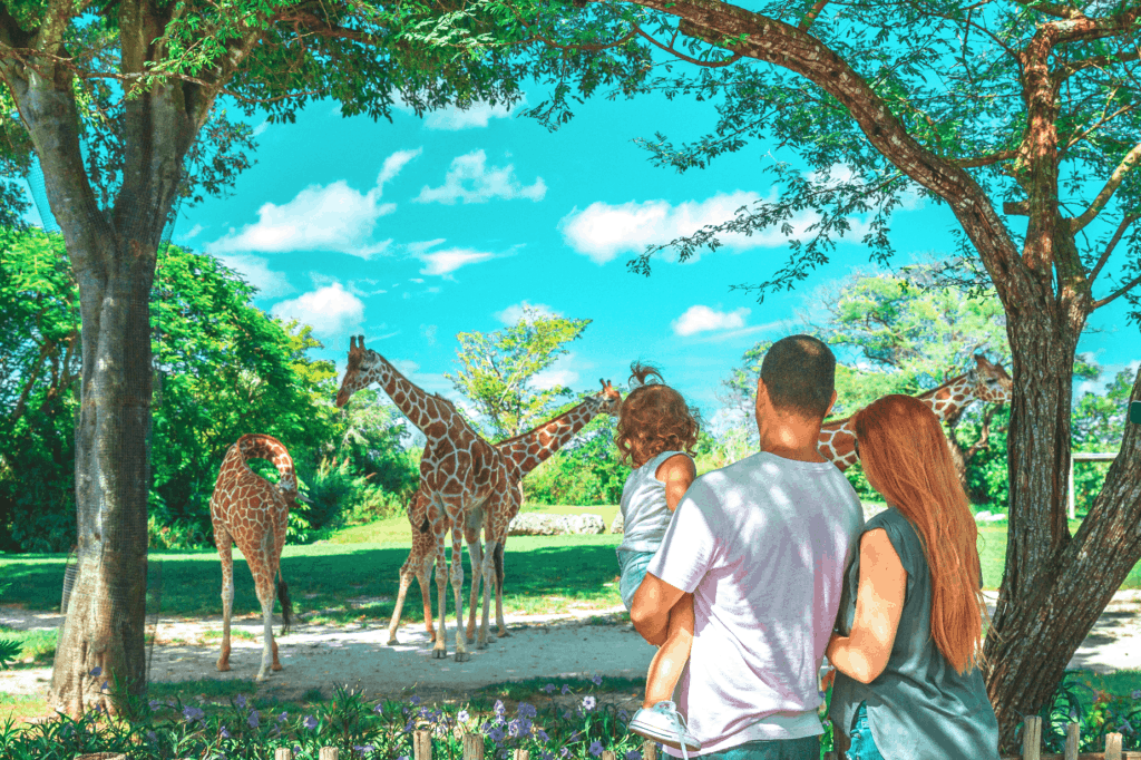 Visiting the giraffes at Zoo Miami.