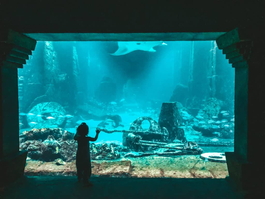 Exploring the Diggs, the huge aquarium inside Atlantis in Nassau, the Bahamas.