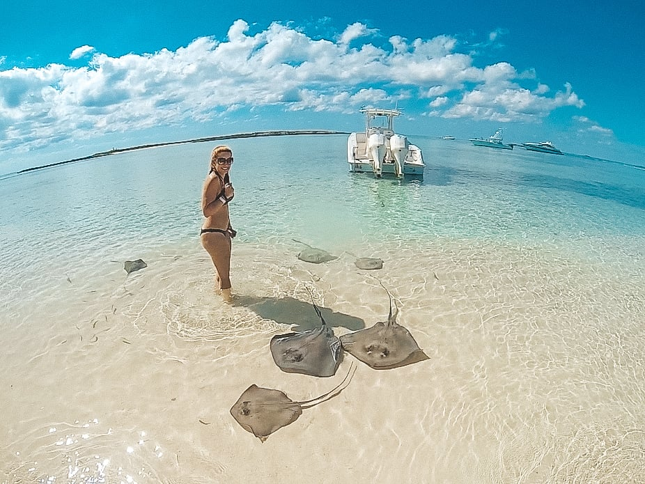 Stingrays in Honeymoon Harbour that are used to being hand fed on a private beach