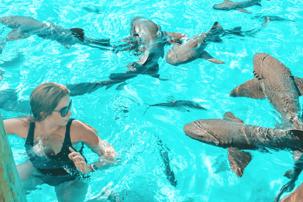 Swimming with the Sharks in Compass Cay Exuma - things to see in Exumas, Bahamas